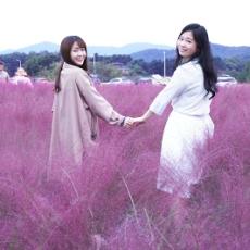 【韓國景點】楊州NARI公園 夢幻波波草+粉紅花海亂子草 (附影片)