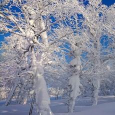 【北海道】名寄站出發乘雪上摩托車 登上1000米山上看雪怪