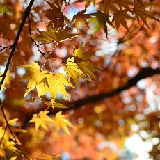 九州紅葉季一天懶人包