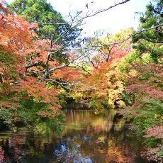 九州紅葉自駕遊~由布院氣質楓景金鏻湖