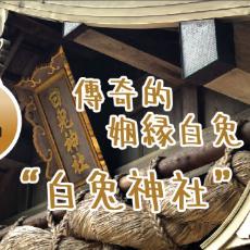 傳說中的姻緣白兔 | 倉吉穿越日本三百年